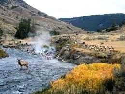 boiling river wildlife